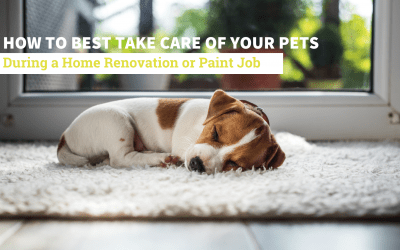 How to Best Take Care of Your Pets During a Home Renovation or Paint Job